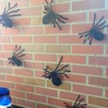 spider1